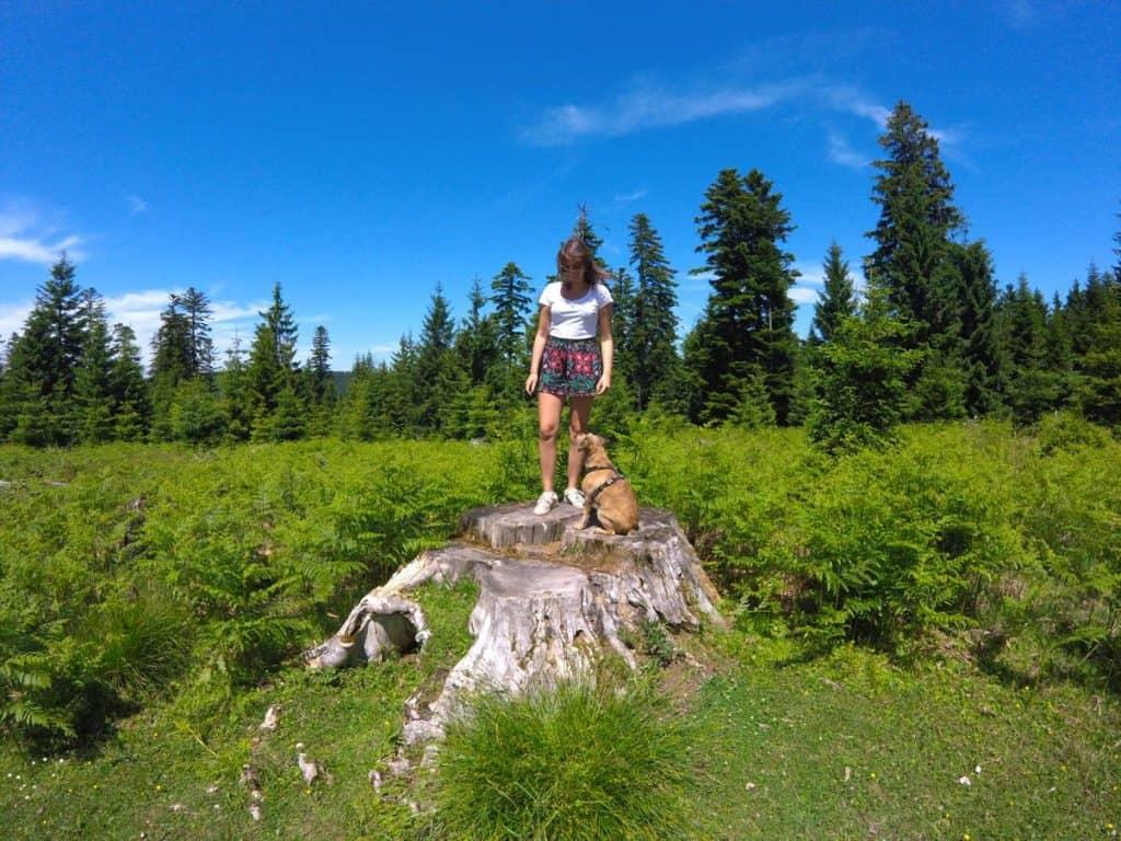 Wandern im Schwarzwald für die ganze Famile. Route im Nordschwarzwald zur Grünhütte über das Hochmoor und den Wildsee bei Kaltenbronn und Bad Wildbad