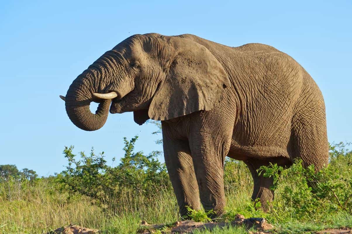 Hluhluwe iMfolozi und iSimangaliso – die Game Parks im Osten Südafrikas
